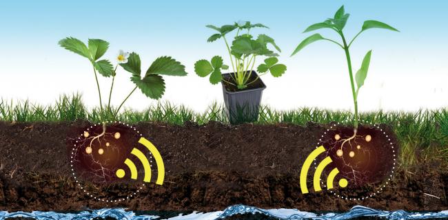 Esquema Quaterna Plant SOBAC